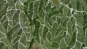 ウエルバのブドウ畑(スペイン)